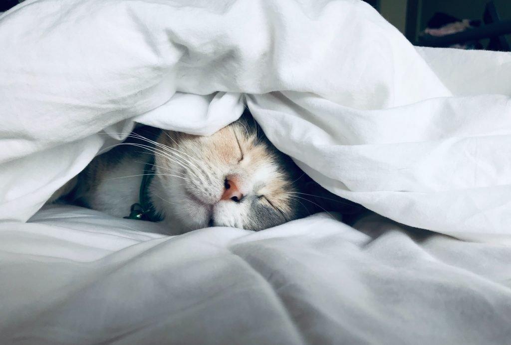 cat-1-1024x691